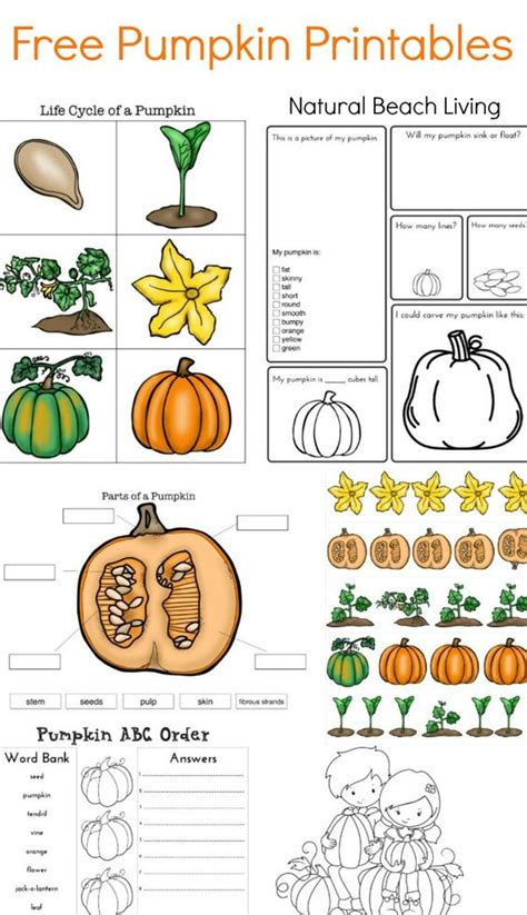 coloring pages of life cycle of pumpkin the best pumpkin activities for kids stem coloring