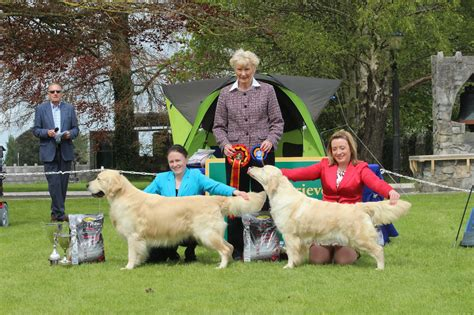 national show golden retriever 2017 golden retriever society of ireland