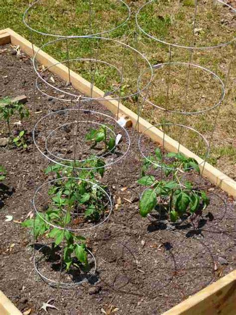 Tuteur à Tomate by 13 Astuces Pour Faire Pousser Plus De Tomates Plus