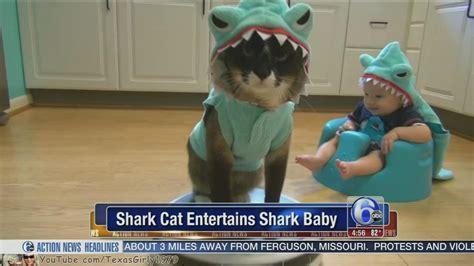baby shark abc video shark cat entertains shark baby abc7ny com