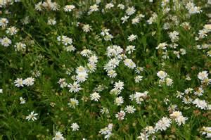perennials for shade erica glasener