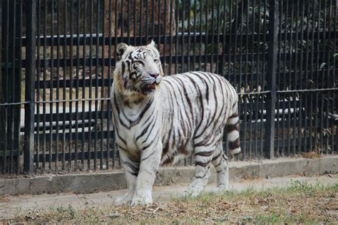 White Zoo animal adoption scheme by delhi s national zoological park