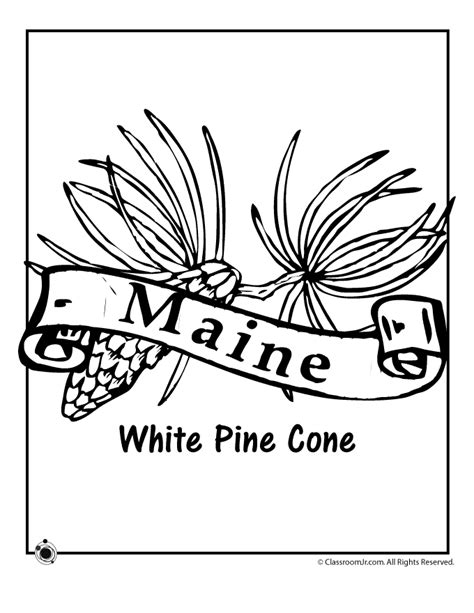 free coloring pages of maine state flower