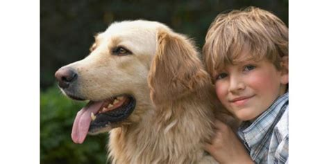 golden retriever with children top 10 child friendly dogs alternative