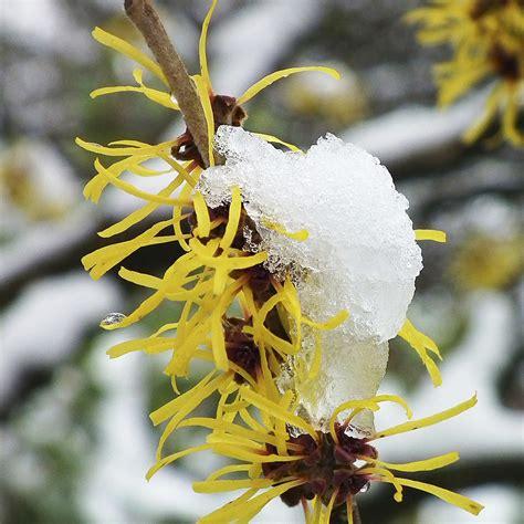 Garten Im Februar by Garten Im Februar Winterlicher Ziergarten Und Gem 252 Segarten Westfalia Gartenjahr Bei Westfalia