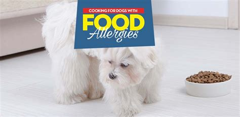 how to feed puppy food how to feed dogs with food allergies top tips