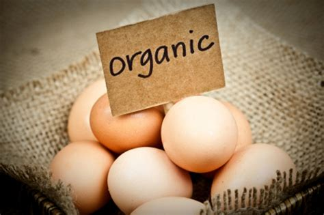 the health benefits of organic eggs momentum training the organic chicken or the free range