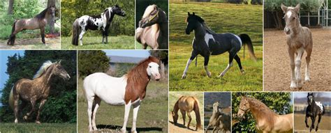 equine color calculator color genetics the colors of
