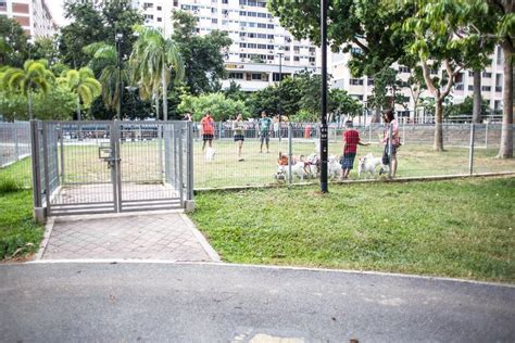 central park puppies 10 runs in singapore that will make your a happy pup