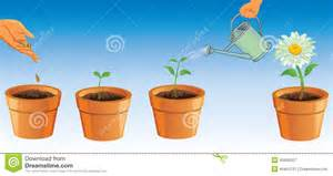 Gardening Indoors - process of growing flowers stock illustration image of front 43993287