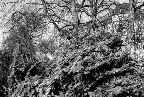 weihnachtsbaum entsorgen leipzig 28 images
