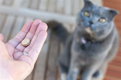 how to get a to take a pill how to get your cat to take pills catster