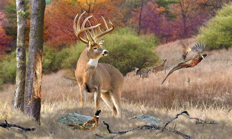 drawing and painting animals this stunning real life deer artwork features a twelve point whitetail deer buck whitetail doe