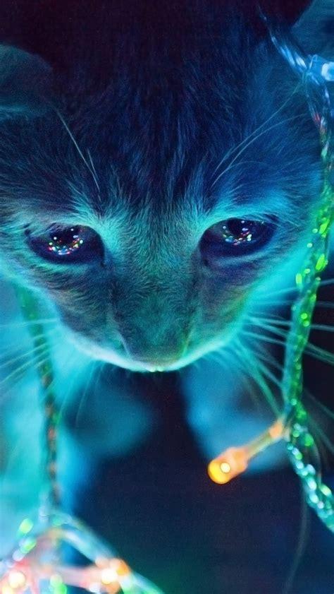 lights cat 640x1136 lights cat iphone 5 wallpaper