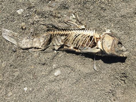 Search For Dead Dead Fish Images Search