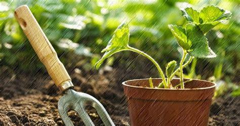 Pupuk Untuk Bunga Dalam Pot cara menanam tanaman hias di dalam pot