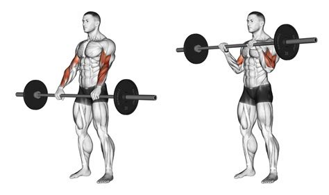 Barbell Curl Barbell Curl Grip Variations Ignore Limits