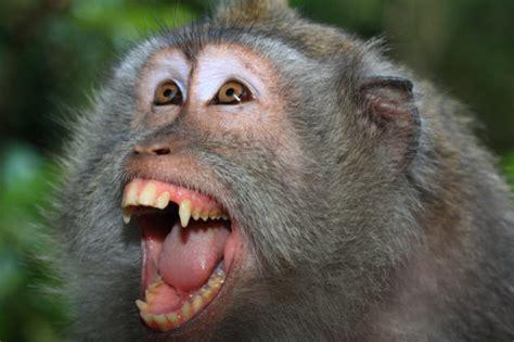 sedere rosso babbuini sedere rosso 28 images foto gratis babbuino