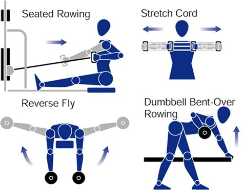 exercise diagrams illustration by marty bee