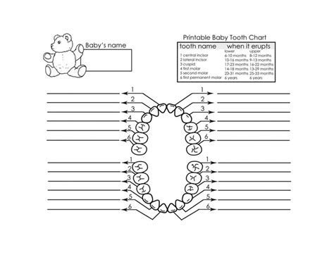 dental chart template top 25 ideas about teeth on coloring pages