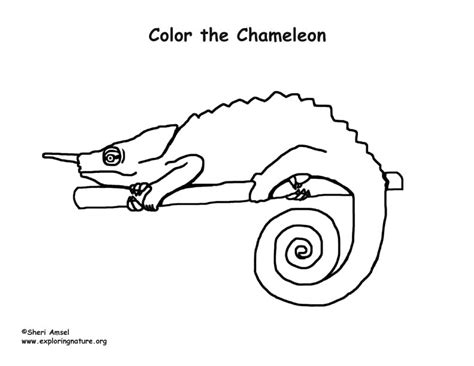 chameleon coloring page pdf chameleon coloring page