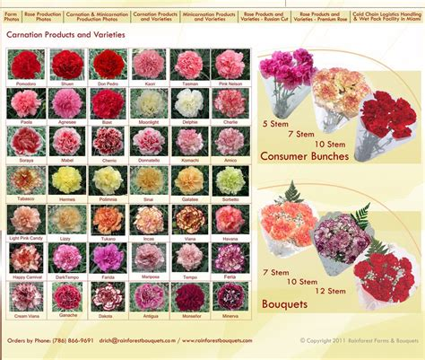 carnation color carnation varieties pink white yellow
