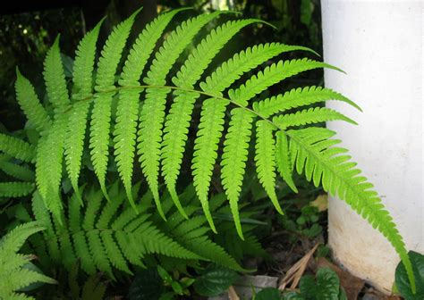 asian rainforest fern jungle container