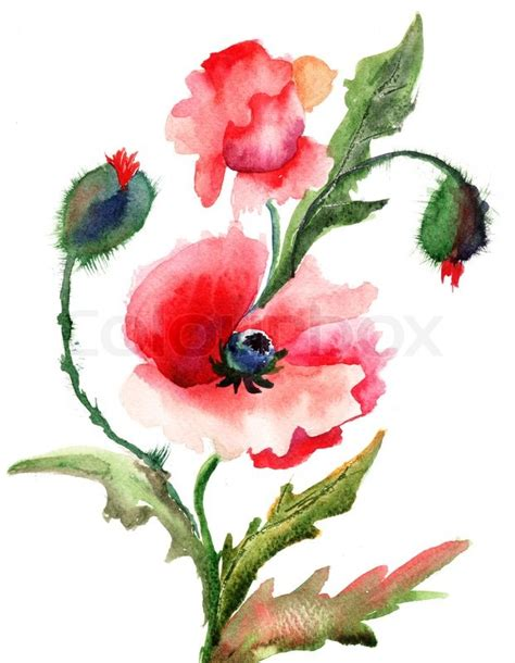 libro watercolour flower portraits beautiful poppy flowers watercolor painting stock photo colourbox