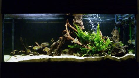 desain aquarium filter sing are fish tank decorations really that necessary useful