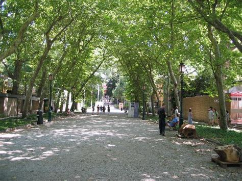 main path in the biennale gardens picture of venice