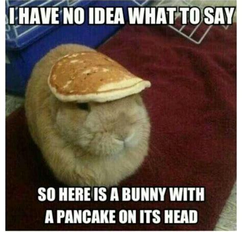 Pancake Memes - bunny with a pancake on its head haha my ella board