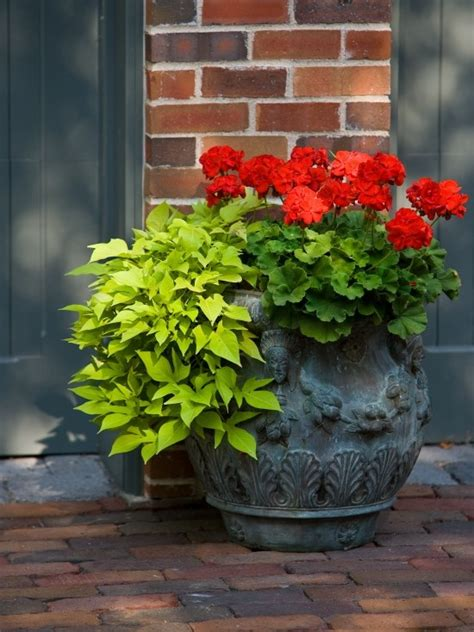 cheap container gardening cheap easy patio ideas design pictures remodel decor