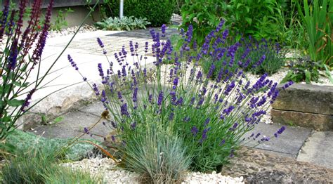 most fragrant lavender plants 8 of the most fragrant flowers for your garden
