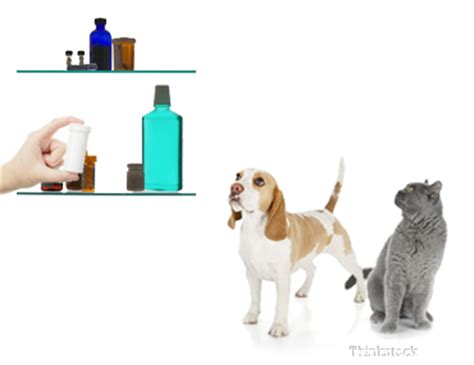 dogs and tylenol tylenol poisoning in dogs and cats