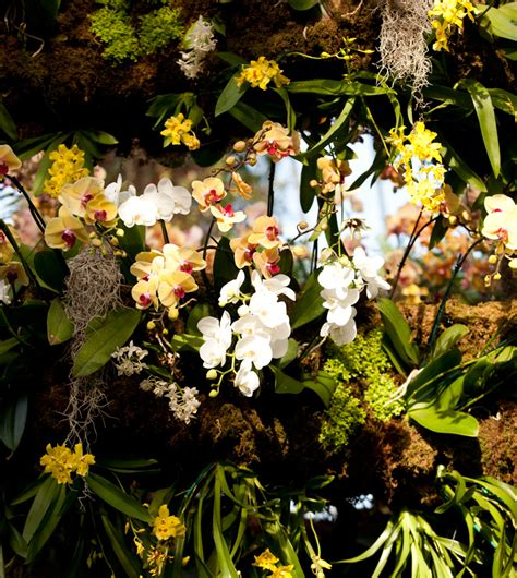 The Orchid Show Chandeliers Lgbt Nybg Archives Plant Talk
