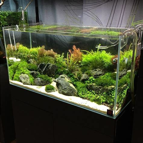 17 best images about aquascape on cichlids
