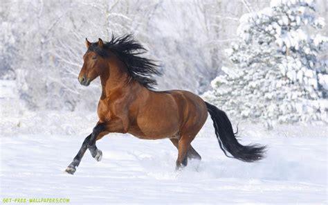 wallpaper horse free download download horse wallpaper