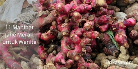 Herbal Jahe Merah Kunyit Temu Lawak 11 manfaat jahe merah untuk wanita yang perlu anda ketahui prikasa