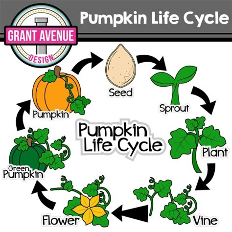 coloring pages of life cycle of pumpkin grant avenue design product categories nature