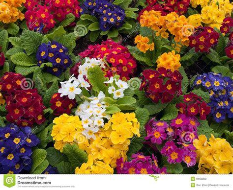 foto di fiori colorati mazzo di multi fiori colorati organizzati insieme