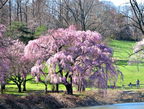 3 cherry tree kinnelon nj in holmdel park in new jersey