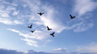Green Screen Photography Green Screen Effect Flock Of Birds Flying In The Sky Youtube