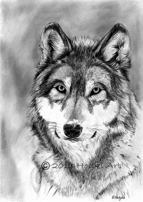 40 Realistic Animal Pencil Drawings Animal Pictures For To Draw