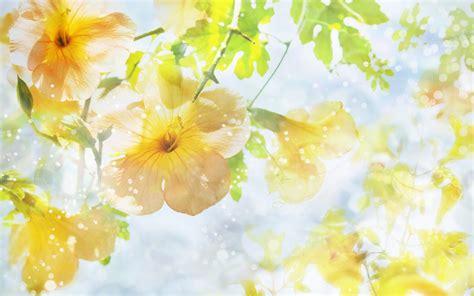 Beautifull Flower Lq flower wallpaper top hd wallpapers