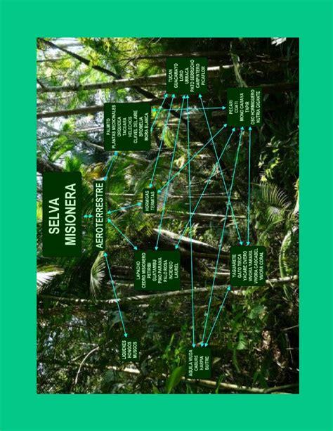 las cadenas troficas y redes troficas ecosistemas y redes troficas