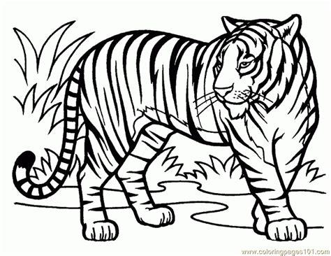imagenes para pintar tigre dibujos de tigres para pintar dibujos de tigres para colorear