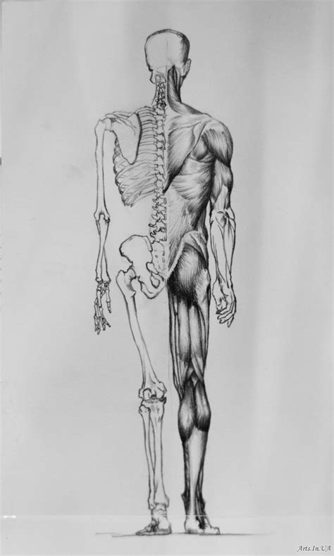 anatomy for the artist anatomy for the artist jeno barcsay pdf merge filesbattle