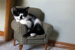 cat sitting in chair sleeping kitten in a tiny chair