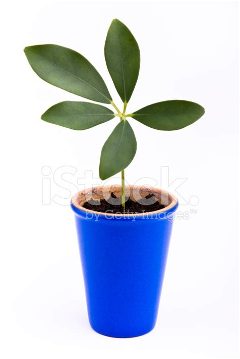 small flower pot plant in small flower pot stock photos freeimages com