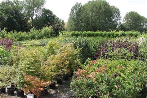 Blumen Im Herbst 4293 by Die Baumschule Klosterhalfen Saisonpflanzen Planzen